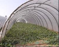 Archi per serre tunnel fredde in tubo zincato for Serre agricole usate in vendita