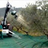 Macchina raccolta olive  Crf one con radiocomando