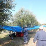 Abbacchiatore  Ombrello olivespeed go plus bosco