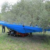 Abbacchiatore  ombrello olivspeed climb